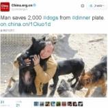 『自分の犬を探して、2000匹の犬を助けた男』の画像
