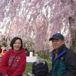 『2008年 4月26日   花見:弘前市・弘前公園』の画像