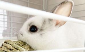 ウサギの遊び道具に買ったモノ