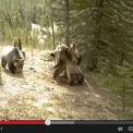 カメラがとらえた!!熊たちの謎過ぎる行動wwww