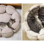 【画像】こんなに大きくなったのニャン!対象物で猫の成長っぷりがわかる