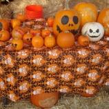『【アメリカのハロウィン】ジャック・オー・ランタン?! 家族で楽しめるパンプキンアート!』の画像