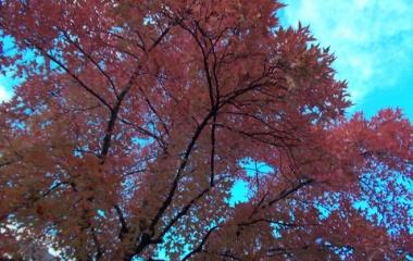 『今年も紅葉見学に行ってきました。』の画像