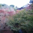 『東福寺』の画像
