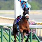 『安田記念2020  【有力馬分析 】 史上初の8冠目ヘ!〜アーモンドアイやその他の有力馬を紹介〜』の画像