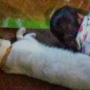 ネコ と ねこ