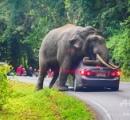 ゾウが通りがかりの車にのしかかる