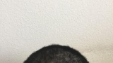ハサミでセルフ散髪したった → これはヤバいwww(※画像あり)
