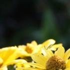 『カマキリの庭仕事』の画像
