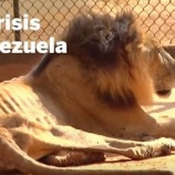 『経済危機のベネズエラの動物園』の画像