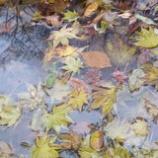 『水面に写る』の画像