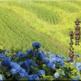 『金山棚田』の画像