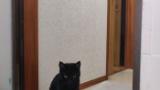 うちの猫が変わっちまったよ…(※画像あり)