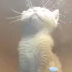 子ネコが目を閉じて上を向いていた。ライトの光がポッカポカ♪ → ずっと子猫はこんな感じです…