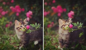動物達が花の香りを楽しむ瞬間にほっこり!忙しい日々をふと忘れて癒される動物画像25枚