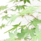 『涼しさを感じる庭の植物 & 収穫が楽しみなポタジェガーデン』の画像