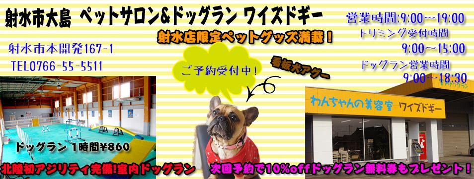 トリミングサロン ワイズドギー 射水大島店 スタッフブログ イメージ画像