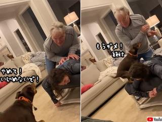 犬ってやつぁ(涙)マッサージをいじめていると勘違いした犬が、必死で少女を守ろうとする
