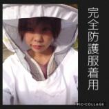 『オオスズメバチ駆除案件 ~ 木の幹 編』の画像