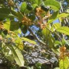 『秋の気配 8 金木犀』の画像