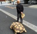 巨大な亀を散歩させているお爺さんが「亀仙人」だと話題に