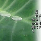 『芋の露』の画像