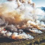 『タスマニア森林火災で原生林の古代種に絶滅の恐れ』の画像