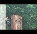 伐採作業で切った枝が当たって死亡