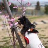 『春の訪れ♡』の画像