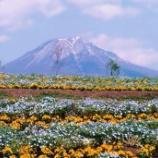 『いつか行きたい日本の名所 とっとり花回廊』の画像