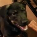 うちのイヌに「おやつ」をあげてみた。わ~い♪ → 1時間ほどこうなります…