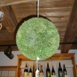 『24年杉玉』の画像