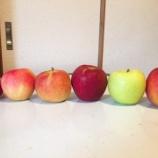 『リンゴを手で割る方法をしってますか?』の画像