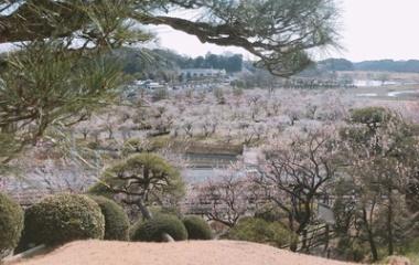 『1年ぶりに偕楽園』の画像