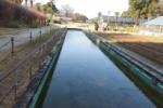 私市植物園の池がガッチガチに氷ってる!~交野ジュラシックパークもすっかり冬です~