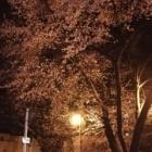『桜🌸(修行連続212日目)』の画像