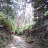 『世界遺産・熊野古道』の画像