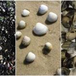 『貝にも伝染性のがん』の画像