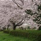 『観桜会』の画像