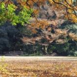 『本日のお散歩(明治神宮の裏、他)』の画像
