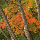『高山村松川渓谷の紅葉10/29』の画像