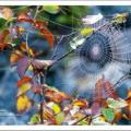蜘蛛の巣とエゾナキウサギ