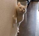 子猫を飼いたいが仕事に行く時メチャクチャ寂しがってなくので可愛そうで飼えない