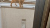 ワイの部屋を毎日覗く猫がいる(※画像あり)
