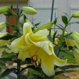『花』の画像