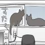 お外が見たい黒猫2匹