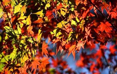 『紅葉の景信山〜高尾山縦走 動画UPしました。』の画像