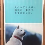 『鯖江に移住して1年半。鯖江の好きなところ!』の画像