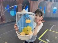 【日向坂46】まるで別鳥!初代ポカはこんな顔だった!!!