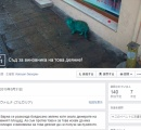 【動画】エメラルドグリーンの色をした猫が見つかる